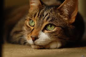 gato maria angeles